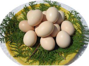 烏骨鶏卵(10個入り/パック)